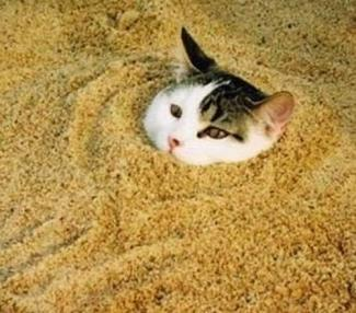oops - cat in the corn husk litter